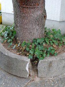 Sprengbaum