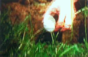Eivergrabung - Mann gräbt Loch in Rheinwiese, Hand legt Ei hinein und gießt Wasser aus Silberkanne auf Ei, Loch wird mit Erde und Wiese verschlossen, Abspann