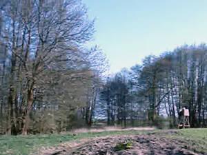 Schrei der Kraniche Rundschau über Bäume, Felder von Menschenschatten unterbrochen