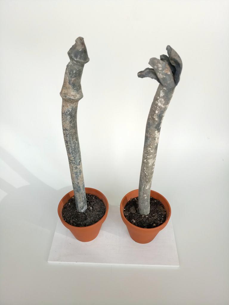 Bleiblumenpaar