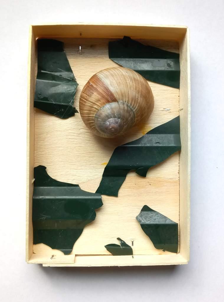 Beetumrandung.Storkow/M, 2021, Bruchstücke aus PVC-Beetumrandung, Schneckenhaus, Holzschachtel vom Käse, 12 x 8 x 3 cm
